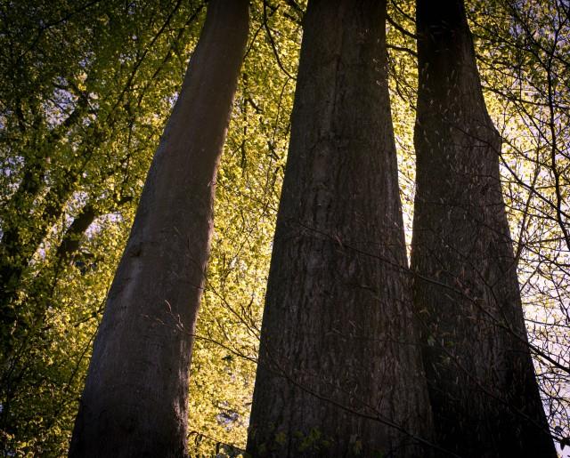 3træer